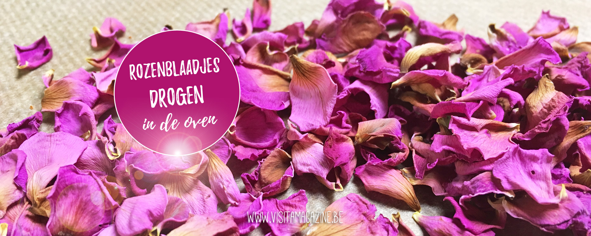 Rozenblaadjes bloemen drogen in de oven