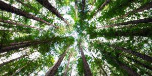 Dutch green business plant bomen om je CO2-uitstoot te compenseren